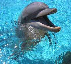 DophinFriend